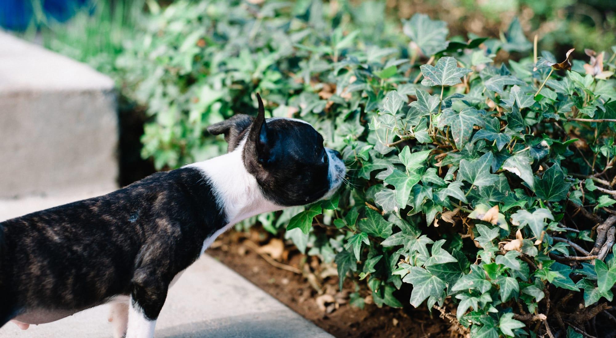Pet-friendly apartments at Terra Apartment Homes in Federal Way, Washington