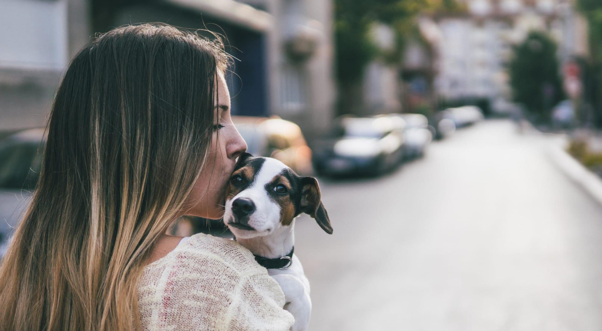 Pet-friendly apartments at Sofi Danvers in Danvers, Massachusetts