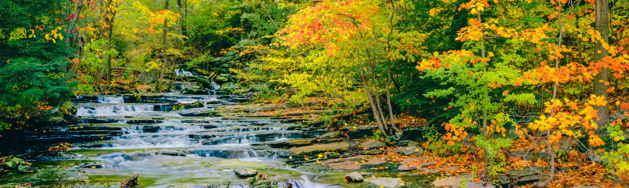 Neighborhood near Autumn Chase in Ellington, Connecticut