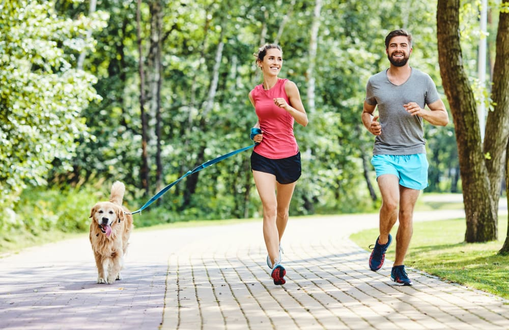 Dog taking her owners for a jog through the lush, green neighborhood at Mountain Vista in Victorville, California