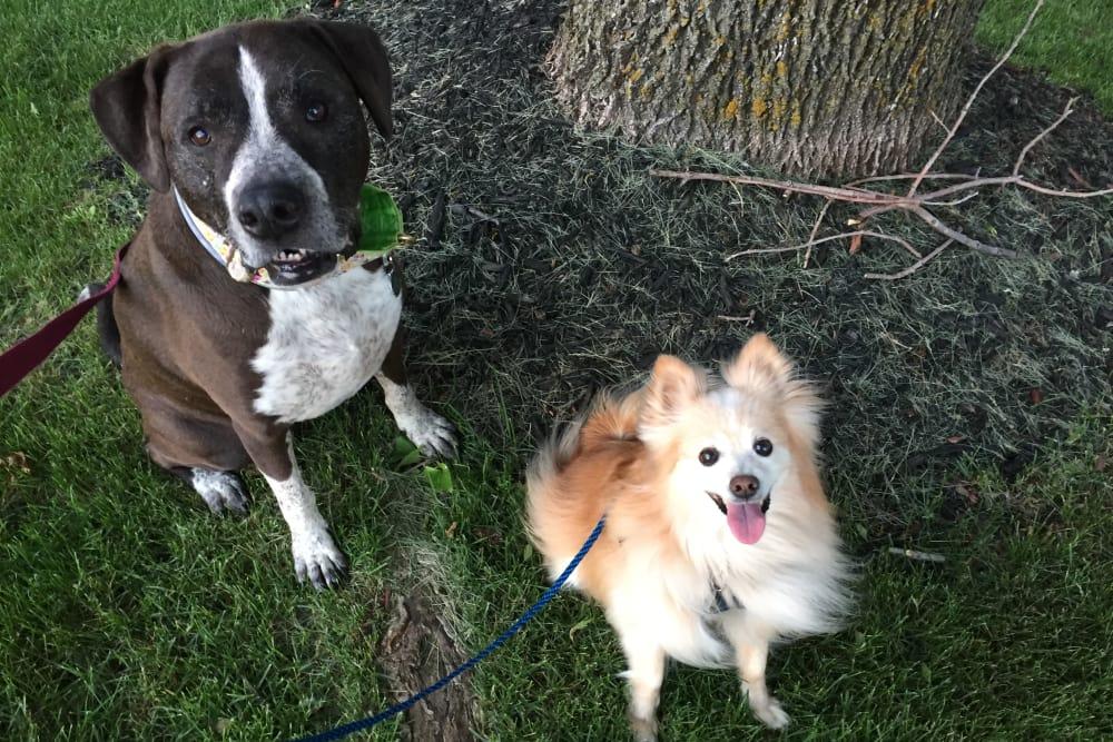 Two dogs at Minooka animal hospital