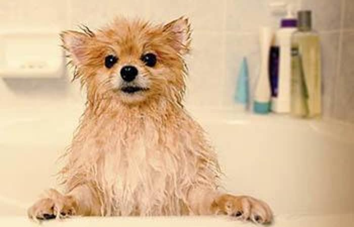 Animal Hospital bathing services in Vancouver