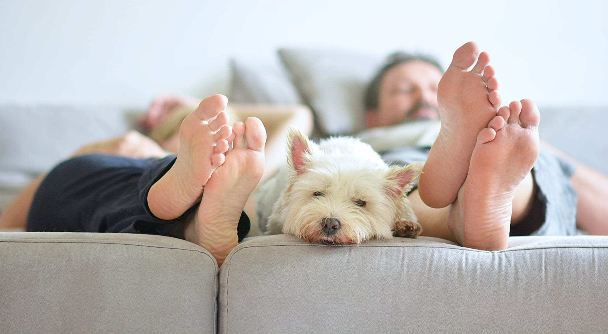 Pet-friendly apartments at The Manors in Pomona, New York