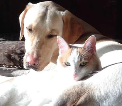 Dog and cat buddies soaking up the sun at Starch Pet Hospital in Des Moines, Iowa