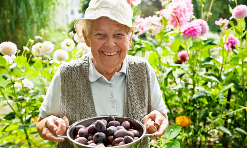 Resident with a bowl of plums in the garden at The Retreat at Fishersville in Stuarts Draft, Virginia