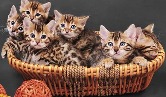 Basket full of kittens at Value Pet Clinic - Kent
