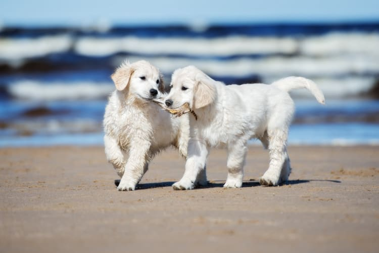 Bring your pets with you to Montecito Apartments at Carlsbad in Carlsbad, California