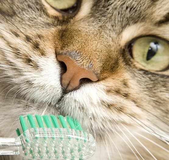 Vancouver dental disease prevention information at Animal Hospital