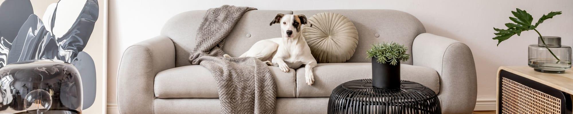 Arthaus Apartments's pet policy in Allston, Massachusetts