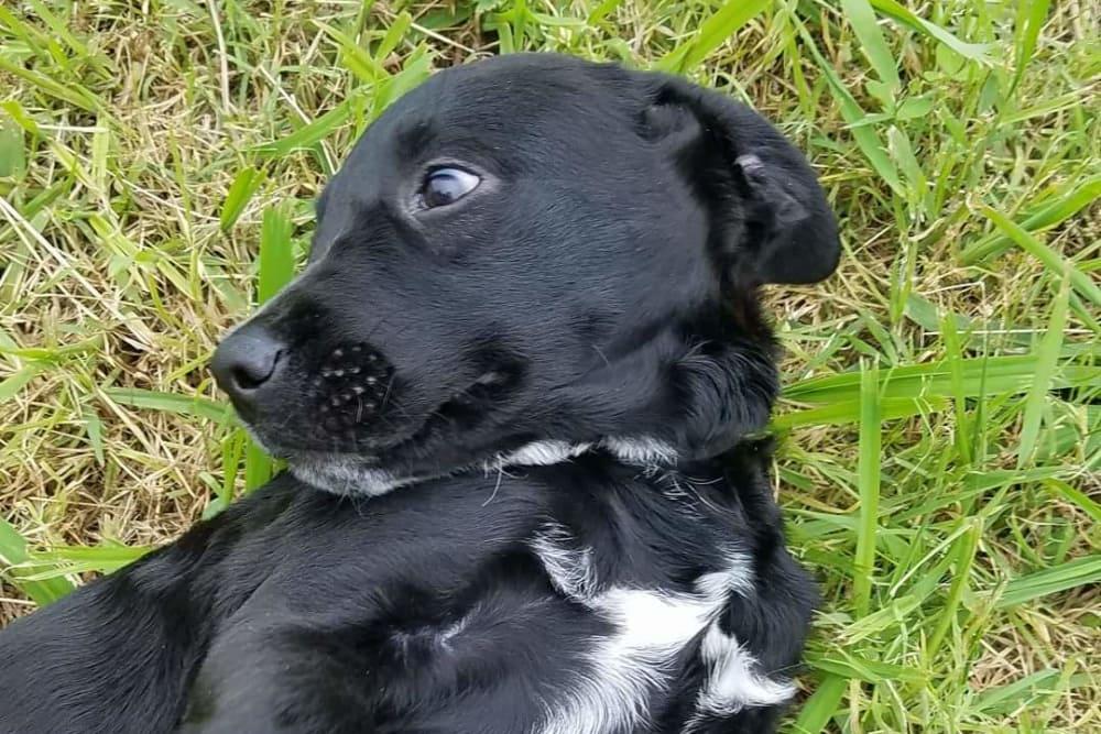 Black dog at Sheridan Road Veterinary Clinic in Tulsa