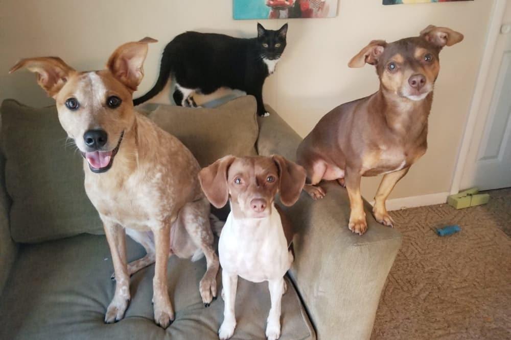 Three dogs and a cat at Minooka animal hospital