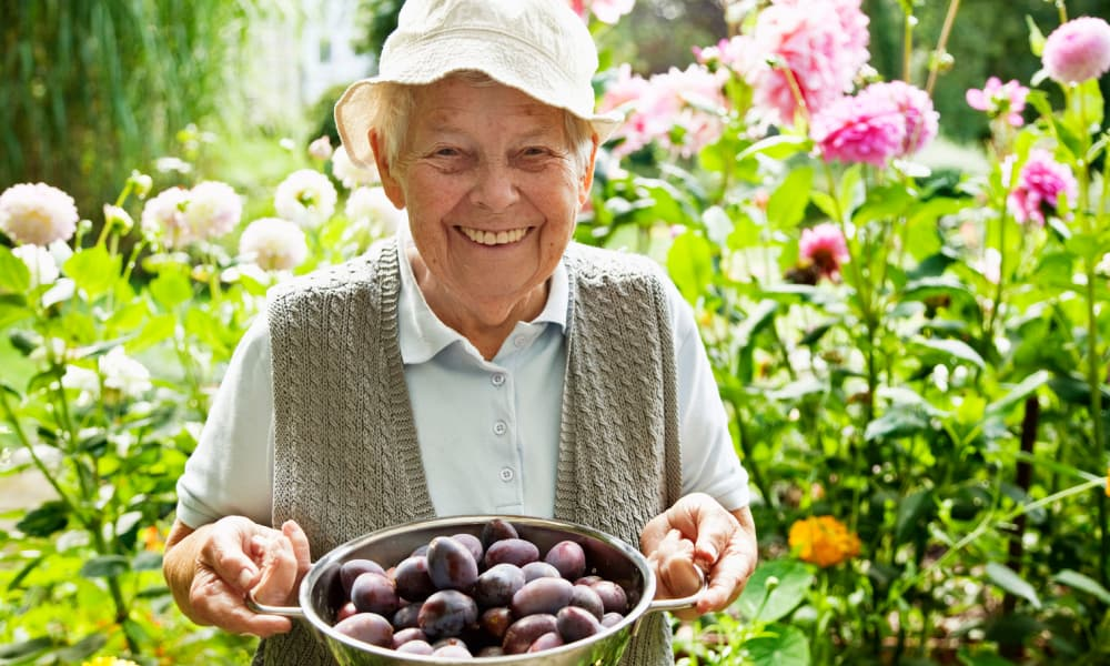 Resident with bowl of plums in the garden at The Retreat at Berryville in Berryville, Virginia