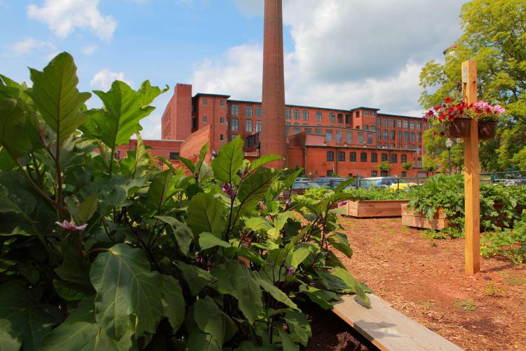 Community garden at The Lofts Of Greenville in Greenville, South Carolina