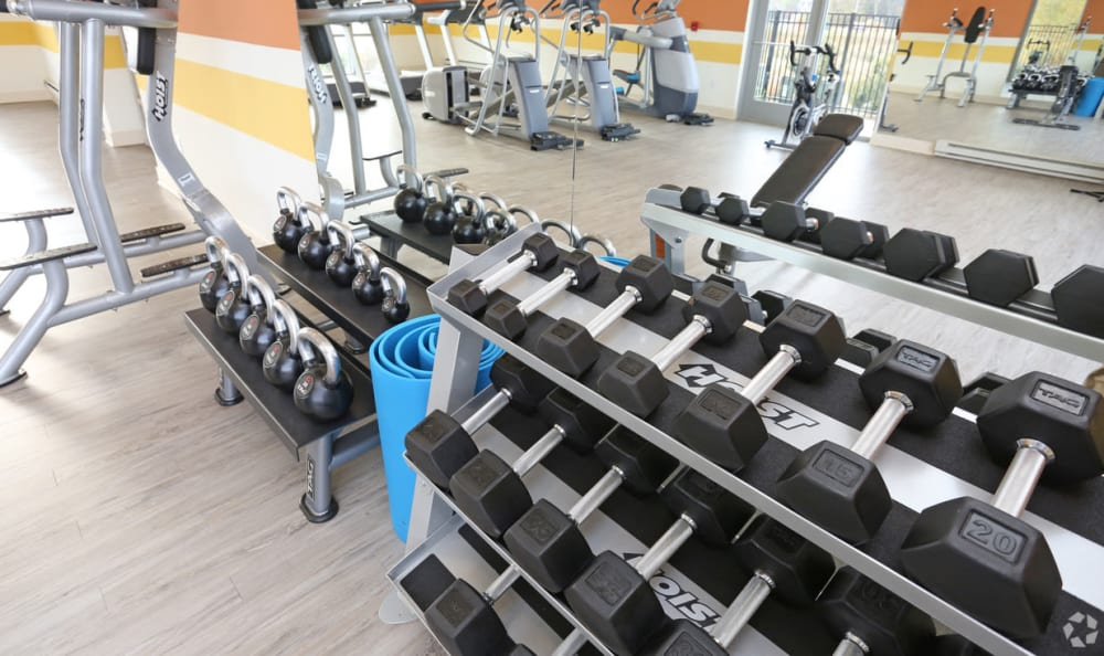 fitness center free weights at Springs at Hurstbourne in Louisville, KY