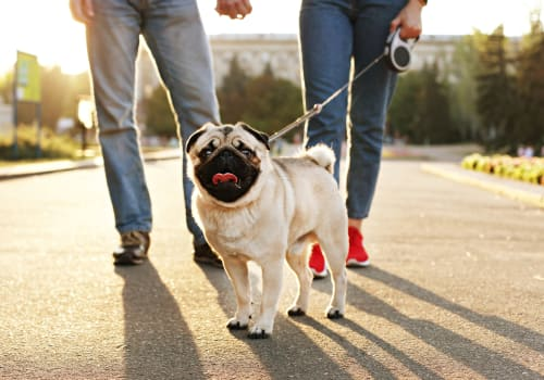 No pet weight limits at Copperline at Point Ruston in Tacoma, Washington