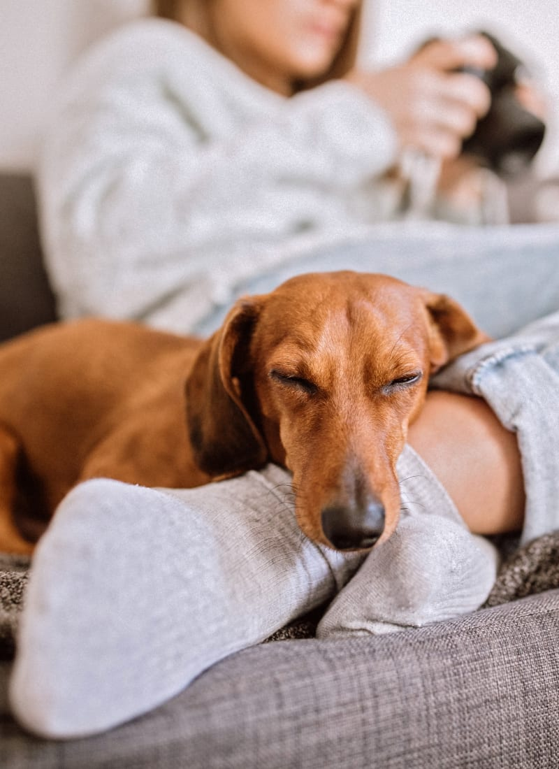 View our pet policy at Marquis on Memorial in Houston, Texas