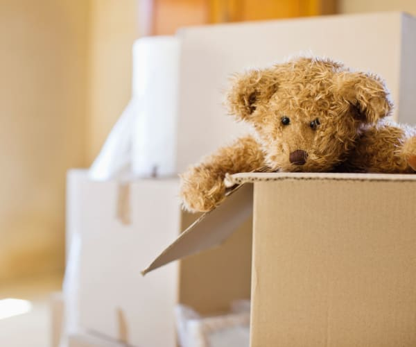 Teddy bear in a box ready for storage at 21st Century Storage in Aspen, Colorado
