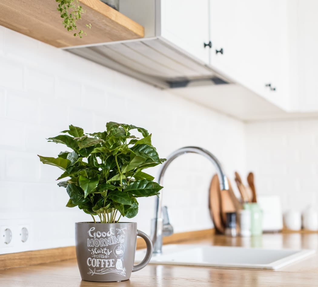 Bright, clean kitchen with an indoor plant at Normandy Park Apartments in Santa Clara, California