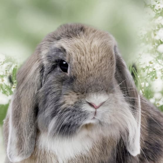Beautiful rabbit at River Road Pet Clinic in Tucson, Arizona