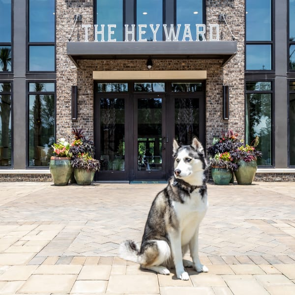 Dog standing in front of apartments at The Heyward in Charleston