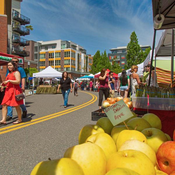 Fresh apples at the Saturday Market Fair near The Maverick in Burien, Washington