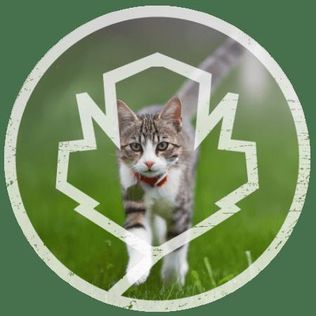 Cat custom photo card for Alta Easterly in East Walpole