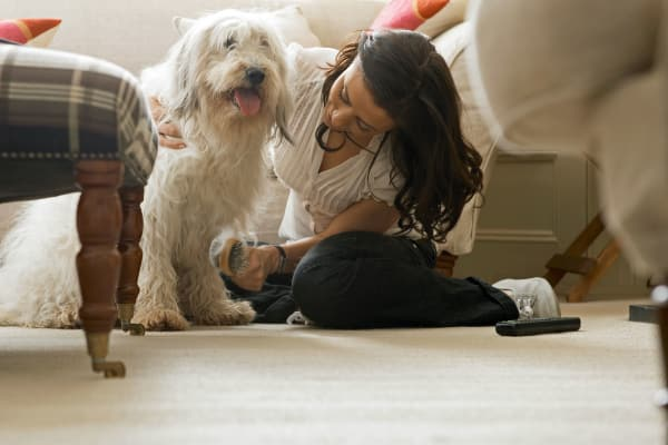 Have fun with your pets at Parkview Towers in Burnaby, BC