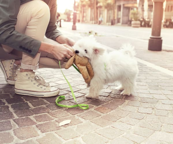 Pet friendly apartments in Carrollton