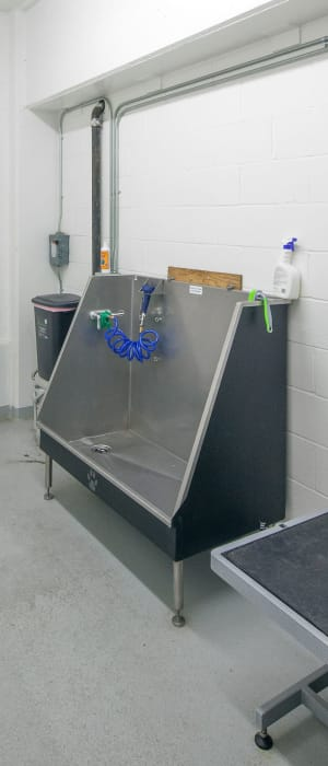 Dog washing station at Eddyline at Bridgeport in Portland, Oregon