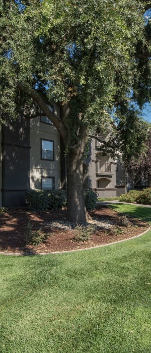 Large grass lawn for your dog to play around in at River Oaks Apartment Homes in Vacaville, California