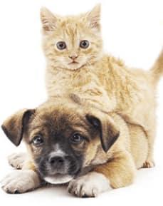 Cat and dog at Animal Care Center of Panama City Beach in Panama City Beach, Florida