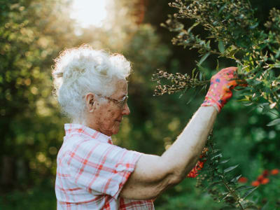 Resident picking berries in the morning at Randall Residence of West Milton in West Milton, Ohio