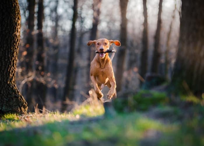 Pet Orthopedic Surgery in Kingston | Apple Tree Cove Animal