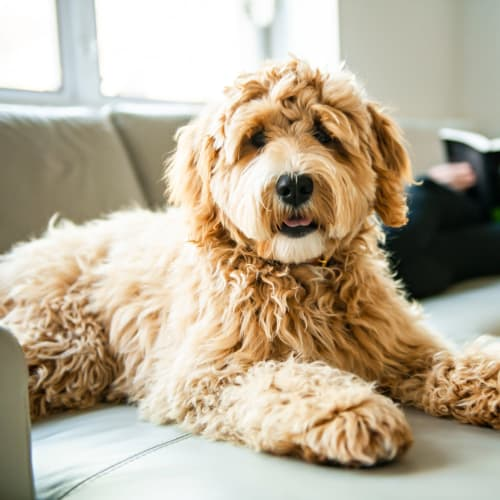 View our pet policy at Nieuw Amsterdam Village in South Amboy, New Jersey