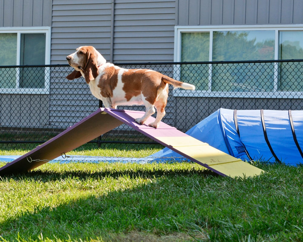 Dog enjoying the dog park at Beacon Pointe Apartments & Townhomes in Sparrows Point, Maryland