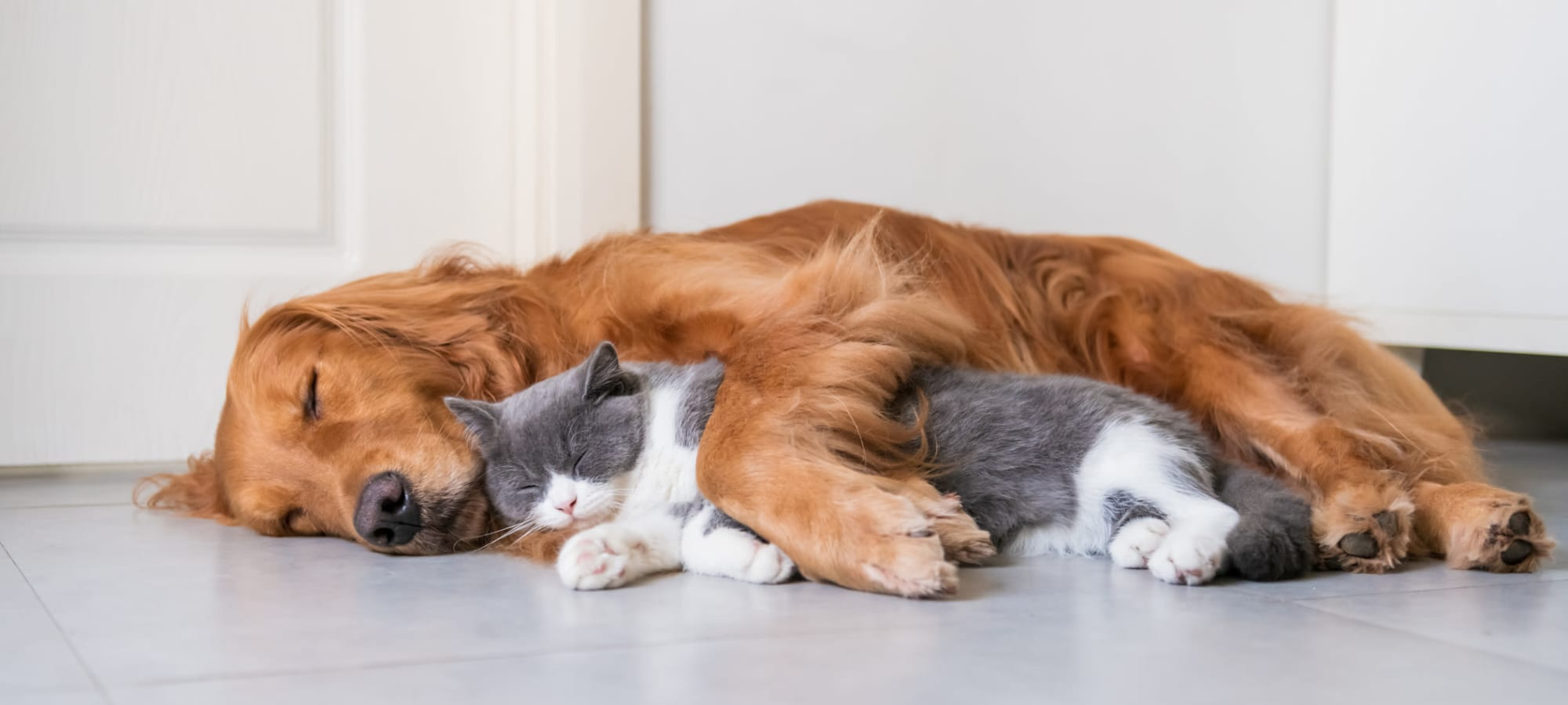 Pet Friendly apartments at Palm Bay Club in Jacksonville, Florida
