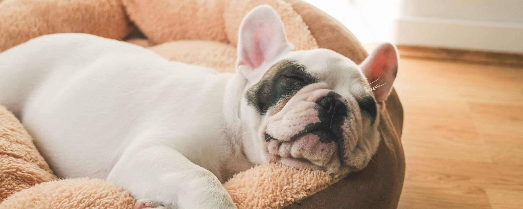 Pet policy at Northfield Townhouses in West Orange, New Jersey