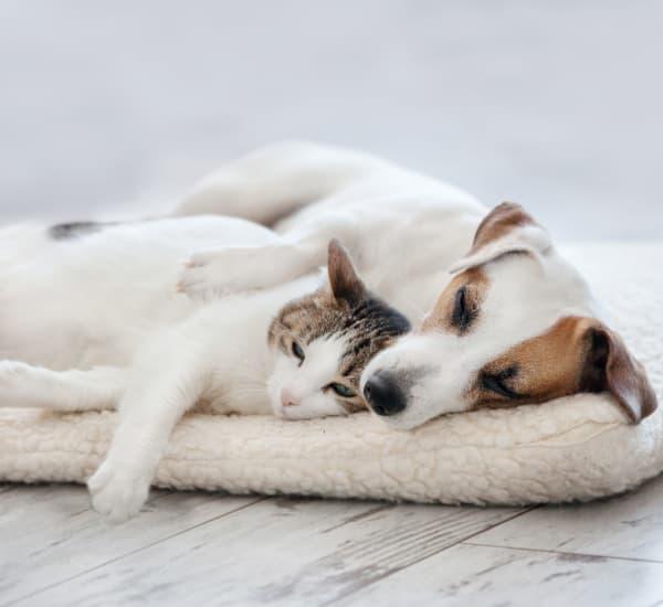 Dog hugging cat laying down at Lakeside Apartments