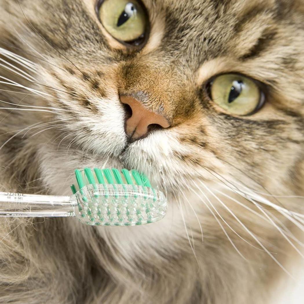 Lafayette dental disease prevention information at Animal Hospital