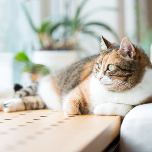 Cat relaxing on the windowsill in her apartment at Ocean Park of Ponte Vedra in Jacksonville Beach, Florida