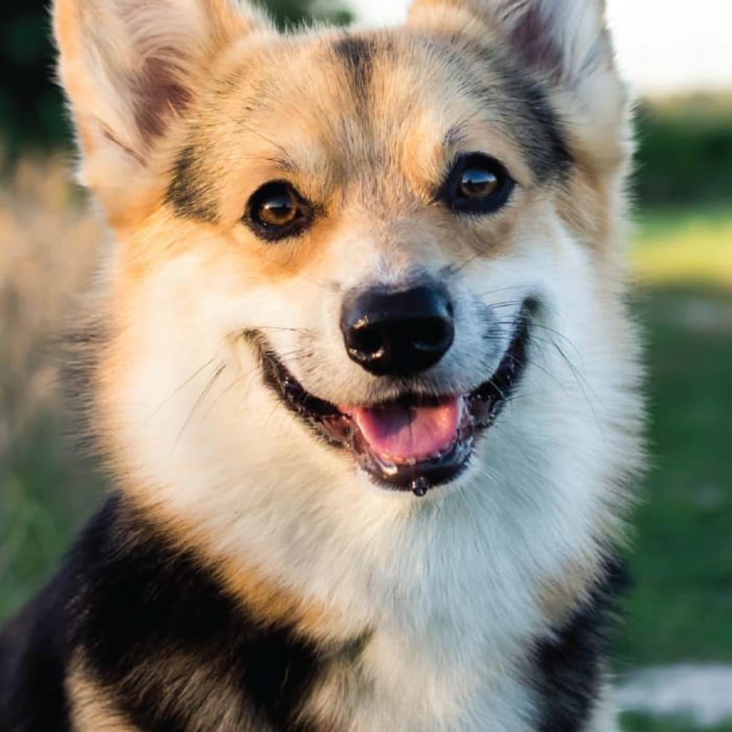 A happy puppy at Tammaron Village Apartments in Oklahoma City, Oklahoma