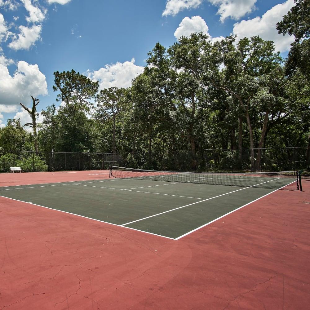 A tennis court surround by trees at Avenue @Creekbridge in Brandon, Florida