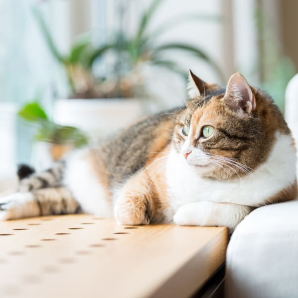 Happy cat relaxing at Lakeside Apartment Homes in Slidell, Louisiana