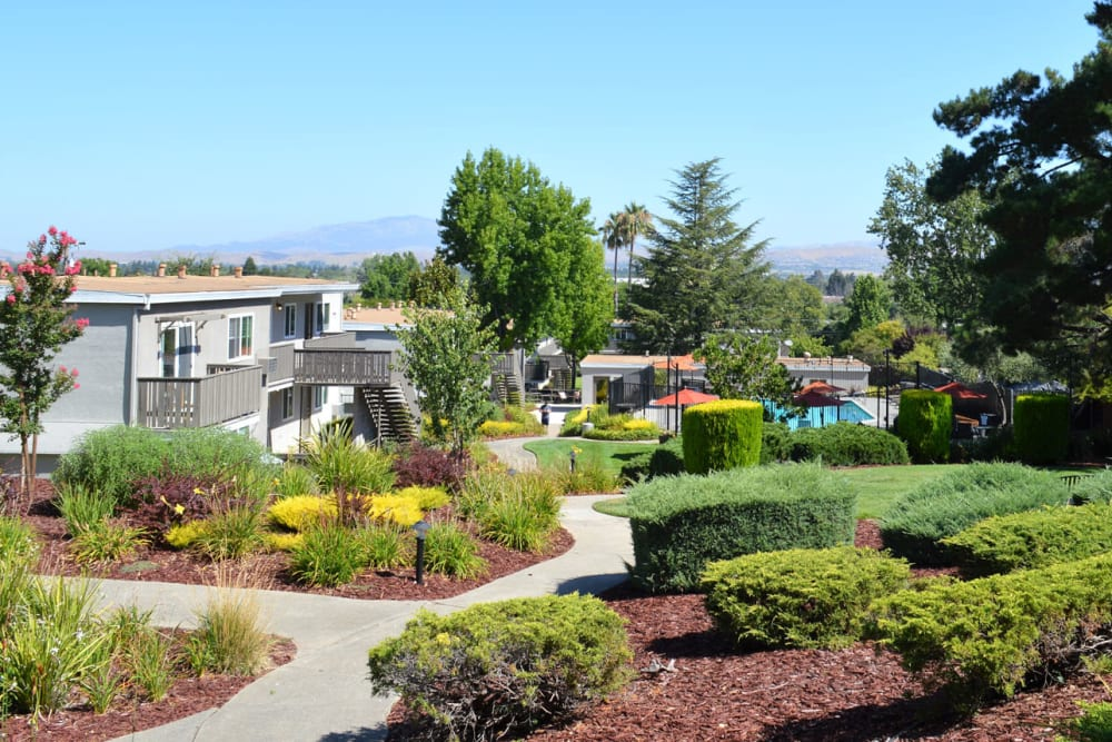 Professionally maintained landscaping along winding pathways through the community at Pleasanton Heights in Pleasanton, California