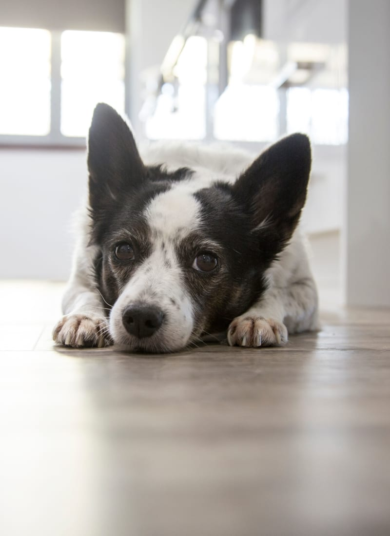 Breed restrictions at Whisper Creek Apartment Homes in Lakewood, Colorado