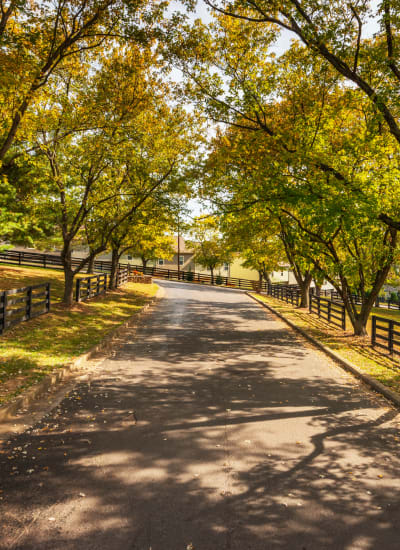 Mature trees lining the driveway leading to our community at Audubon Park in Nashville, Tennessee