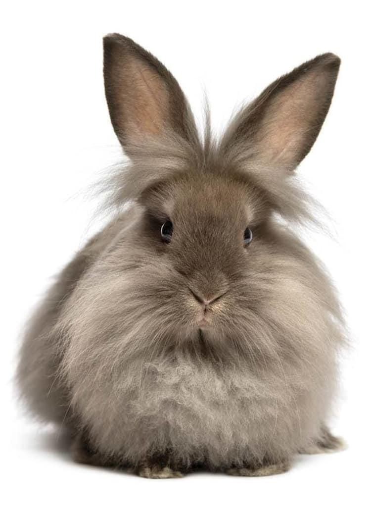 Fluffy bunny at Niles Veterinary Clinic in Niles, Ohio