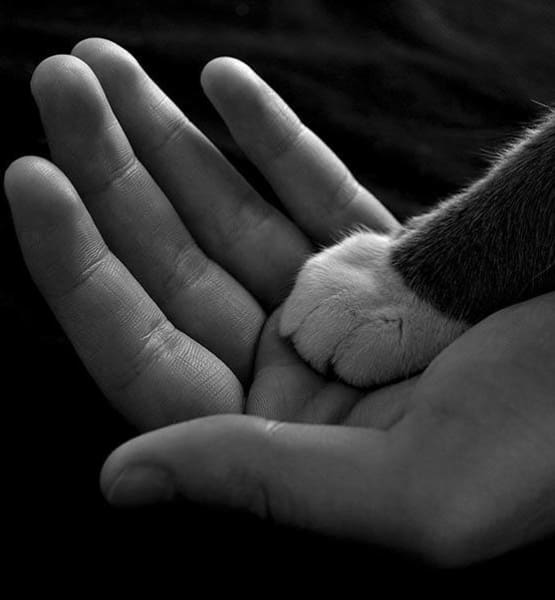 Cat paw in human hand at Value Pet Clinic - Kent