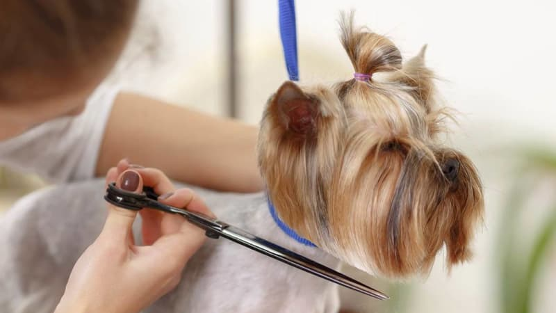 Grooming services for your pet at Lafayette Animal Hospital
