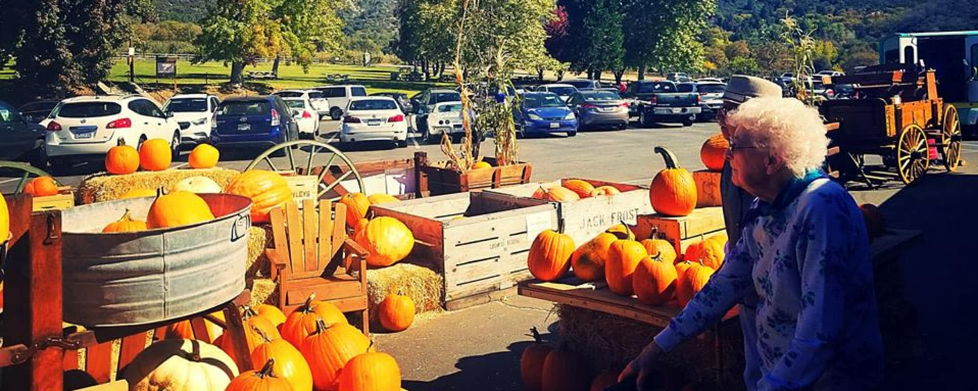 Senior gazing at Pumpkins at Dale Commons in Modesto, California